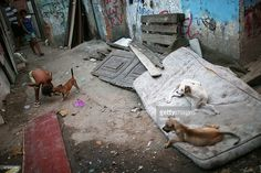 A child plays with a dog in an impoverished area in the unpacified Complexo da Mare slum complex, one of the largest favela complexes in Rio, on March 18, 2014 in Rio de Janeiro, Brazil. The group of 16 communities house around 130,000 residents while plagued by violence and poverty and dominated by drug gangs. Mare is located close to Rio's international airport and has been mentioned as a likely pacification target for the police. Rio's Police Pacification Unit (UPP) now controls 38 of…