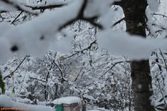 Gaby's Worlld: Ninge, ninge, ninge! Outdoor, Outdoors, Outdoor Games, The Great Outdoors