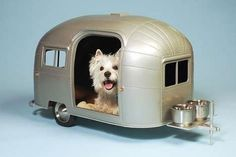 Cool doggy airstream trailer