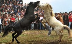 Quick links to share the petition: Stop horse bouts for entertainment purposes in China! | Yousign.org