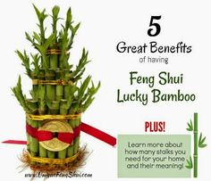 The five awesome benefits of having your very own Feng Shui Lucky Bamboo at home!