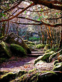 Ireland and Peg's Cottage. Forest Park at Gougane Barra, Shehy Mountains, County Cork.