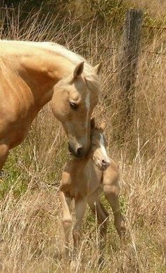 Palomino Mare and Foals. All The Pretty Horses, Beautiful Horses, Animals Beautiful, Beautiful Life, Farm Animals, Animals And Pets, Cute Animals, Horse Pictures, Animal Pictures