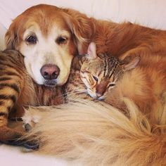 Well if this isn't cute. Daisy with her baby Tiger. In Pursuit, Old Dogs, Dog Love, Zen, This Is Us, Daisy, Friends, Awesome, Cute