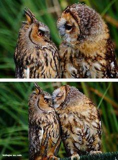 Entoures moi de tes ailes mon amour batifoles moi encore merci c était si ..sofy