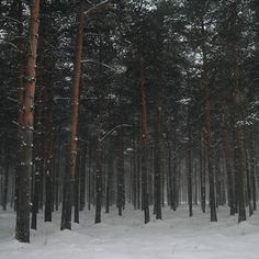 Landscape Forest Winter 60 Ideas For 2019 Twilight, Russian Winter, Chronicles Of Narnia, Land Scape, Winter Wonderland, Wilderness, Adventure Travel, Scenery, Earth