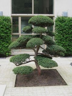 55 Creative Front Yard Landscaping ideas for Your Home #yardlandscaping #landscapingideas #frontyardyandscaping | GentileForda.Com