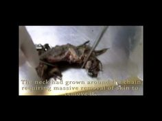 Neglected and Abused German Shepherd in Italy - YouTube