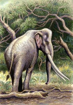 "Palaeoloxodon (=Elephas) recki in colour by <a href=""http://WillemSvdMerwe.deviantart.com"" rel=""nofollow"" target=""_blank"">WillemSvdMerwe.de...</a> on @DeviantArt"