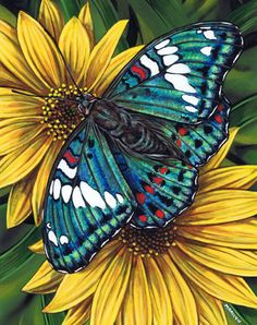 Gaudy Baron Butterfly by Marilyn Barkhouse