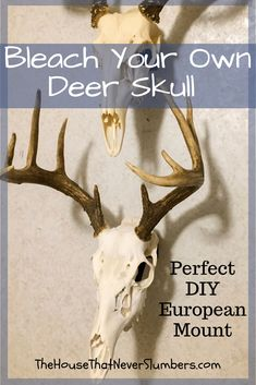 Bleach Your Own Deer Skull for a Perfect European Mount - Buck - Let us show you how to bleach a deer skull to make your own European mount for display. It's a simple and inexpensive process that can save you hundreds of dollars. Deer Skull Decor, Deer Hunting Decor, Painted Deer Skulls, Whitetail Deer Hunting, Deer Hunting Tips, Archery Hunting, Elk Hunting, Deer Camp, Hunting Stuff