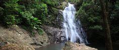 Araucaria Falls - Goomburra Section is a grade 4 Return hike located in Main Range National Park Queensland. The hike should take approximately to complete. Hiking Backpack, Hiking Trails, Backpacking, Maine, Waterfall, National Parks, Australia, Adventure, Outdoor
