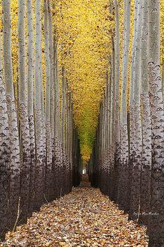 Walking Towards The Light....Tree Farm near Boardman, Oregon