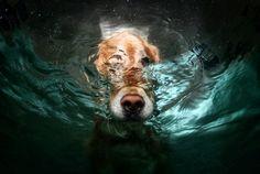 wow, amazing images, dog submerged
