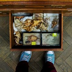 A drawer full of Molluscs behind the scenes in the Horniman, London