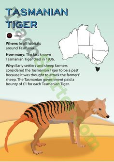 A poster showing information about the extinct Tasmanian tiger.