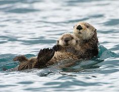 A countdown of the cutest parents in the animal kingdom.