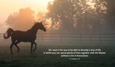 Horse trotting in an Ohio pasture on a foggy morning at sunrise.  Photo by Cathleen Clapper Photography, Ohio