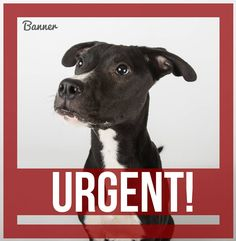 Dekalb County GEORGIA URGENT PUP! We are extremely low on space & Banner's is URGENT! **My URGENT date has passed & no one has come to get me! ** Banner is a super sweet & attentive 11 month old pup that would love a home to call his own. A little shy at first, but as soon as the treats come out he is a new dog! He is very responsive to positive training techniques https://www.facebook.com/dekalbrescue/photos/a.597599587008597.1073741883.393094197459138/700540836714471/?type=3&theater