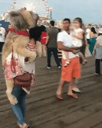 Stuff goes down at Santa Monica pier. Cute Funny Animals, Funny Animal Pictures, Funny Dogs, Cute Gif, Funny Cute, Hilarious, Animals And Pets, Baby Animals, Cute Puppies