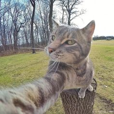 Manny the cat taking selfie on a gopro