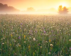 Damian Debski: Wiltshire Wildflower Meadow. 3rd Place, Wildflower Landscapes.  Picture: Damian Debski, International Garden Photographer of the Year 2013