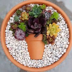 Decoration trend: Small colorful DIY succulent flower pot in a top .- Deko-Trend: Kleiner bunter DIY-Sukkulenten-Blumentopf im Topf Decoration trend: Small colorful DIY succulent flower pot in a pot pot colorful - Succulent Gardening, Succulent Terrarium, Cacti And Succulents, Planting Succulents, Planting Flowers, Succulent Ideas, Succulent Display, Gardening Tips, Organic Gardening