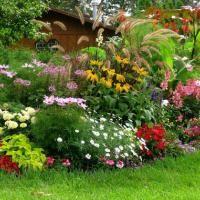 engrais naturel gratuit plante