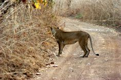 Kamerun Panther, Travel, Animals, Africa, Animales, Trips, Animaux, Viajes, Traveling