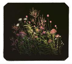 https://www.behance.net/gallery/41651859/Weeds-n-Wildflowers