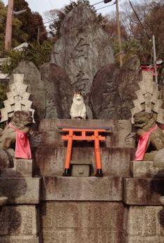 Kitty guarding Fushimi Inari-taisha in Kyoto Japanese Shrine, Japanese Cat, I Love Cats, Cute Cats, Funny Cats, Fu Dog, Dog Cat, Animals And Pets, Cute Animals