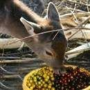 Plant wildlife food trees instead of a food plot.  Easier to grow and maintain and less expensive in the long run