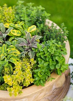 How to make a herb planter  - Better Homes and Gardens - Yahoo!7
