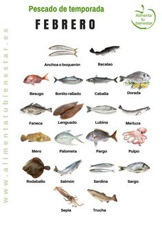 Seasonal fish in February Fish Chart, Homemade Fishing Lures, Food Inc, Salt Water Fish, Kunst Poster, Seasonal Food, Food Humor, Savoury Cake, Yummy Drinks