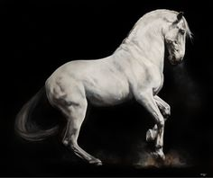 Fine Art Giclée Print on 330gsm Archival Paper - unmounted and delivered worldwide rolled in a robust tube. Each and every one is personally signed and titled by Tony. 'Power', a Lipizzaner stallion,
