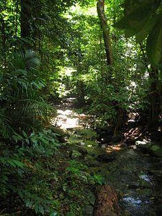 Daintree Rainforest, Wold Heritage Site.  Pristine.