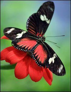Stunning Butterflies!