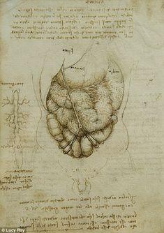 Da Vinci | The abdomen
