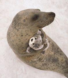 This is so pure    Animal Gifs 🐾 (@BabyAnimalGifs) | Twitter