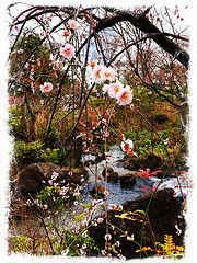 Spring has come / Midtown Roppongi, Tokyo / Photo by me Tokyo Midtown, Roppongi, Asian, Spring, Plants, Plant, Planets