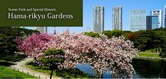 Hama-rikyu Gardens - a wonderful place    #AAtoAsia