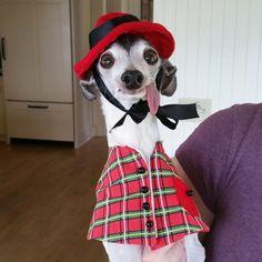 Zappa le chien à la langue pendante qui ressemble à Sid 2Tout2Rien