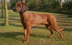 Doggies, Animals, Dogs, Mountain Range, Pet Dogs, Little Puppies, Animales, Animaux, Animal