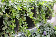 The Best Perennials to Plant in Window Boxes | eHow