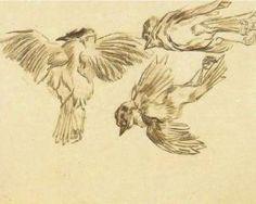 Studies of a Dead Sparrow - Vincent van Gogh