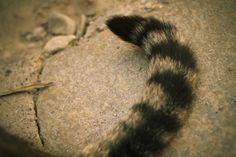wikiHow to Make a Cats Tail -- via wikiHow.com