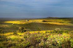 Fields of flowers by Nauta Piscatorque on YouPic West Coast, Fields, Mountains, Landscape, Nature, Flowers, Travel, Naturaleza, Viajes