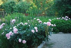 Julias Vita Drömmar: Trädgård