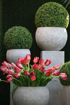 I love the topiaries. So easy to take care of in a container. Boxwood Garden, Topiary Garden, Boxwood Topiary, Garden Urns, Garden Fountains, Container Plants, Container Gardening, Beautiful Gardens, Beautiful Flowers