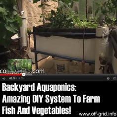 Backyard Aquaponics: Amazing DIY System To Farm Fish And Vegetables!